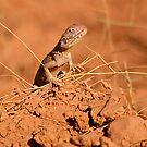 Posing Lizard by Denny0976