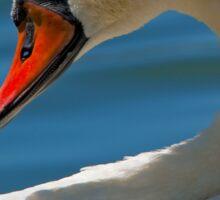Mute Swan (Cygnus olor) Sticker