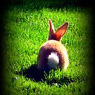 Peter Cottontail by AngieBanta