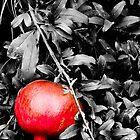 Forbidden Fruit by Spiiral
