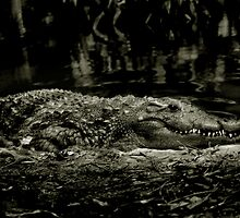 Gator Grin by Kayla Remedies