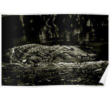 Gator Grin Poster