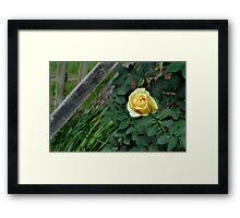 Rose Jaune Framed Print