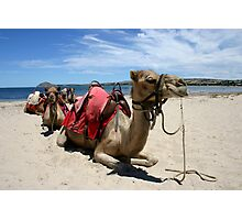 Camel train Photographic Print