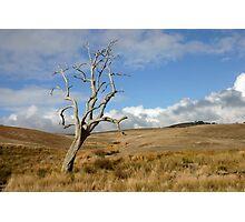 Australian Landscape 1 Photographic Print