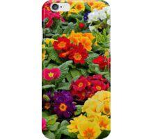Spring Polyanthus iPhone Case/Skin