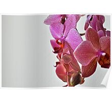 Wall of Orchids Poster