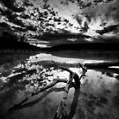 Dead in the lake by Saverio Savio