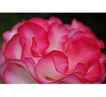Rose Ribbons Photographic Print
