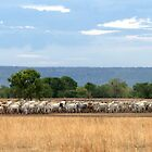 Cattle muster by lateralconcepts
