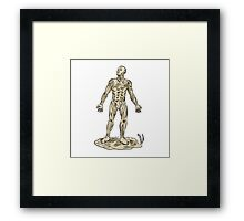 Human Muscle Anatomy Etching Framed Print
