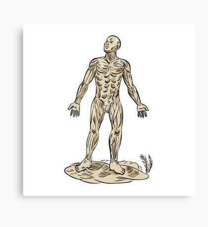 Human Muscle Anatomy Etching Canvas Print