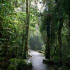 Rainforest Walk by shanmclean