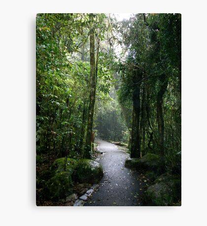Rainforest Walk Canvas Print