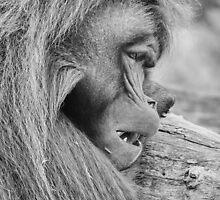 Monkey Poster by OliverKubicka