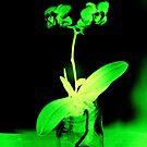 Fluorescent GREEN ORCHID by scarletjames
