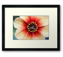 Insect on a Flower Framed Print