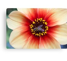 Insect on a Flower Canvas Print