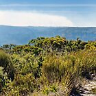 Blue Mountains Bush Trail by jayneeldred