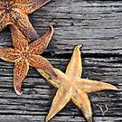 Starfish Love 2 by for the love photography