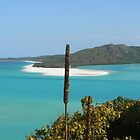 black boy spears looking over hill inlet by kyle coffee