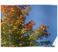 Coat of many colors - Baker's Park Reserve, MN Poster