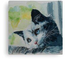 Little grey cat Canvas Print