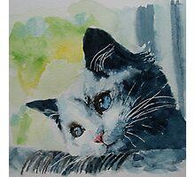 Little grey cat Photographic Print