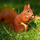 Squirrel n. 5 by seawhisper