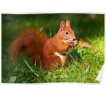 Squirrel n. 5 Poster