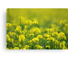 Yellow Smell Canvas Print