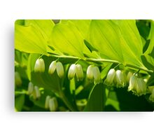 Spring Garden Flower Canvas Print