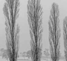 Winter Trees - Uralla NSW Australia Sticker