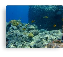 Life in the Red Sea Canvas Print
