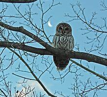 Owl in the Morning by Carol Bock