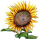 sunflower by symea