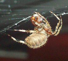 Feeding spider by rockinmom5509