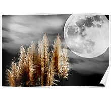 Pampas Grass in the Moonlight Poster