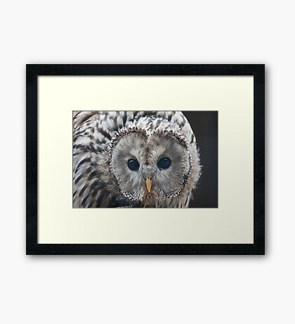 Young Tawny Owl Framed Print