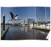 Gray Wood Stork and the Dock Poster