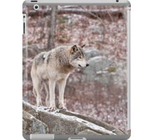 Timber Wolf on Outcropping iPad Case/Skin