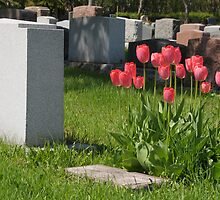 Tulips on a Tomb by lamiel