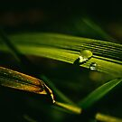 Morning Dew by Danny Roozen