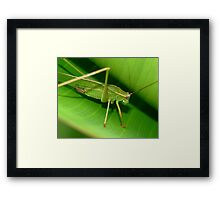 Grass Hopper Framed Print