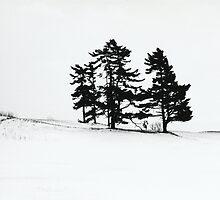 Trees, Field, Snow...Fenelon Falls 2010 by Ken Hill