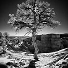 Aura - Bryce Canyon Pine in Infrared by Clayhaus