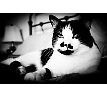 Rudy, Ruler of the Roost Photographic Print