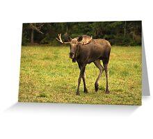 Magnus Moose Greeting Card