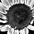 Sun Flower Suit by Mark Batten-O'Donohoe