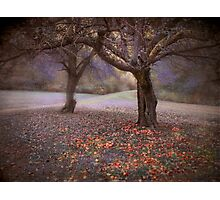 fallen fruit Photographic Print